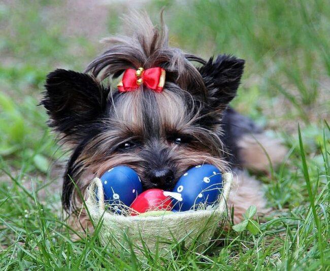 Dog Ate Egg Shell
