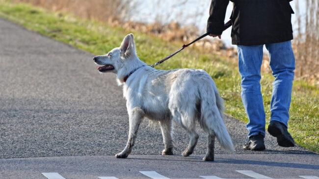 Dog Walking Sideways After Grooming