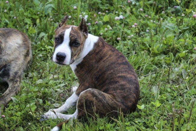 Weak Pasterns In Dogs