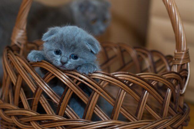 Cat Enema Side Effects