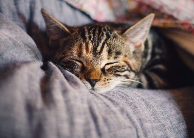 Can Cats Eat Pretzels