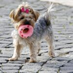 Best Scented Dog Toys