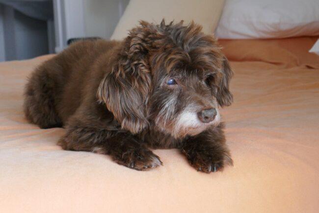 Best Dog Trundle Beds