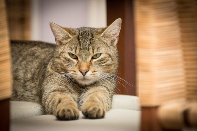 Cat Diarrhea After Enema
