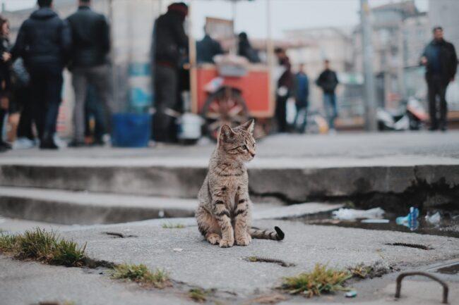 Cat Leaking Poop