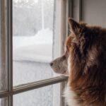 Dog Window Perch