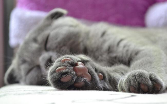 Cat Horned Paw