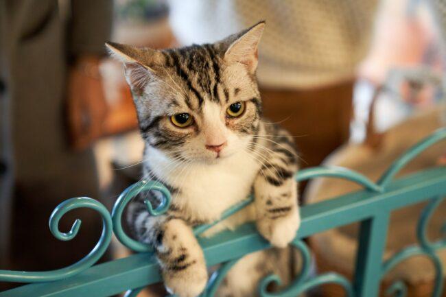 Middening Cat