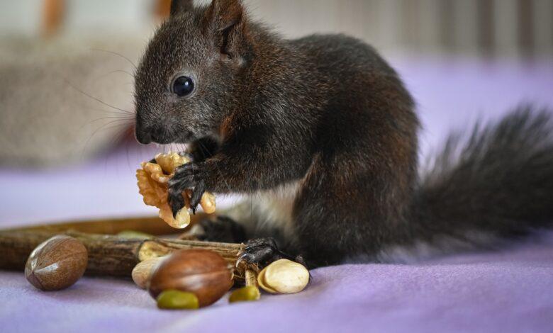 Do Chipmunks Carry Diseases