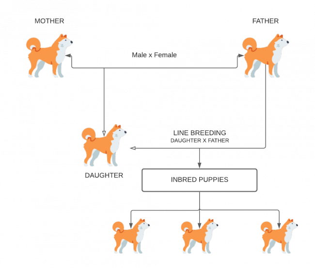 Line Breeding Chart For Dogs